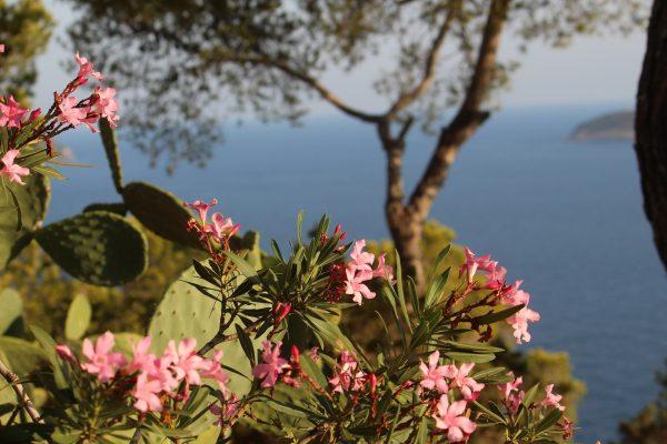 fleur rose et cactus et en arrière plan la mer
